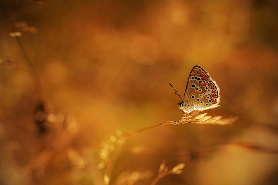 Butterfly's Dream..