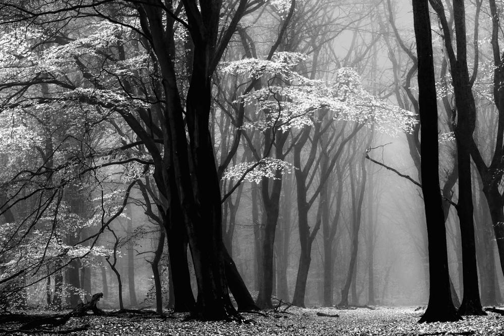 A piece of fine art art photography titled Winter Is Coming by Lars van de Goor