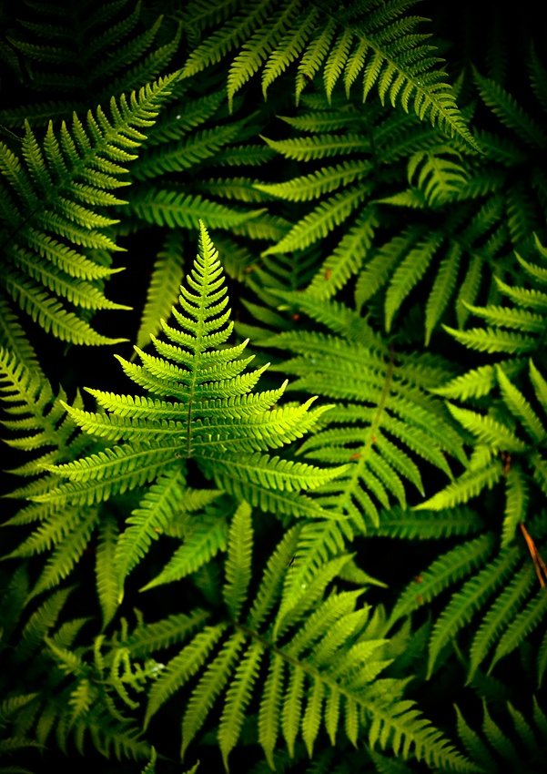 A piece of fine art art photography titled Green by Joni Niemelä