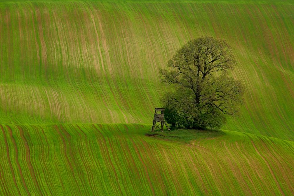 A piece of fine art art photography titled Spring Field by Judit Bánszki