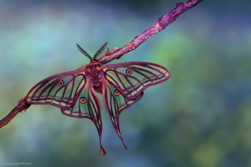 Stained glass moth