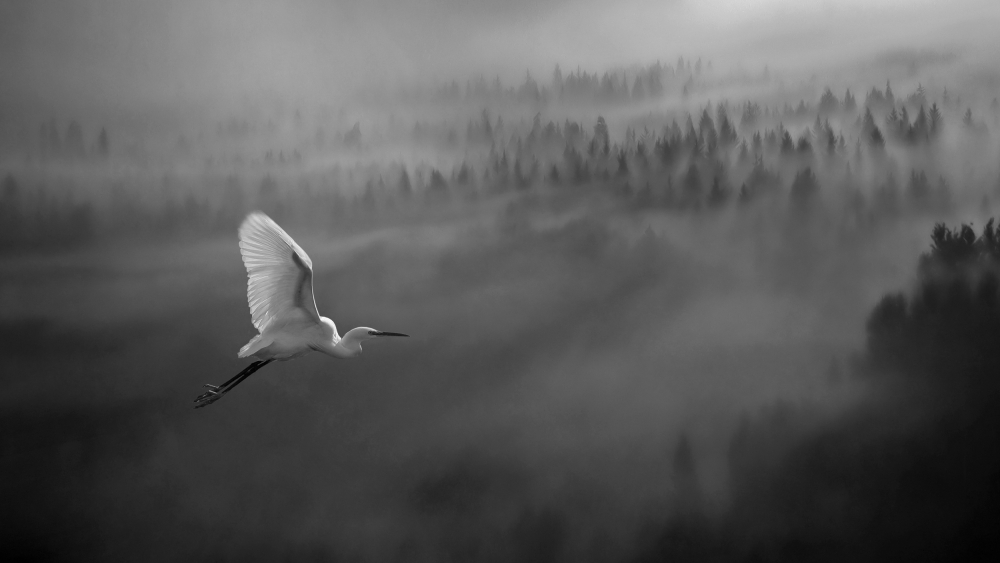 A piece of fine art art photography titled Dreaming of You by Matjaz Cater