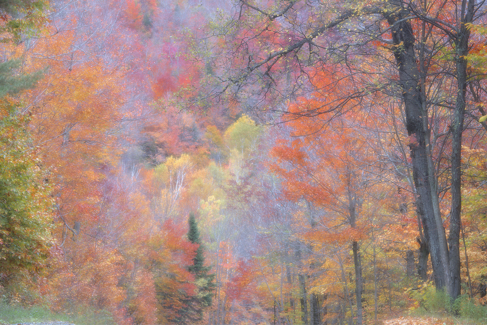 A piece of fine art art photography titled Autumn Is Here by Usha Peddamatham