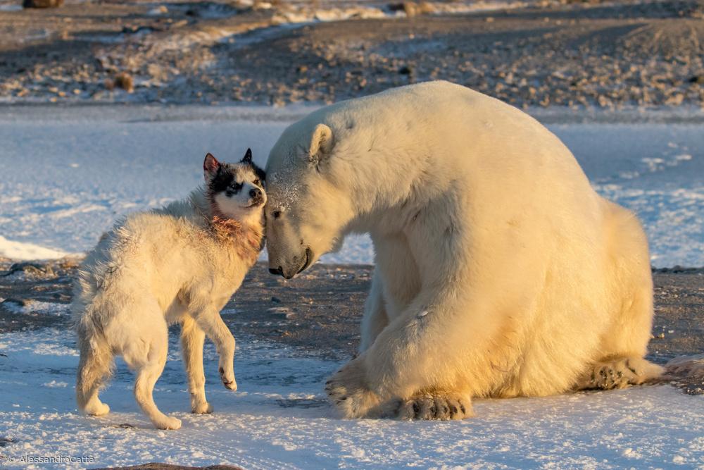 The Dog & The Bear