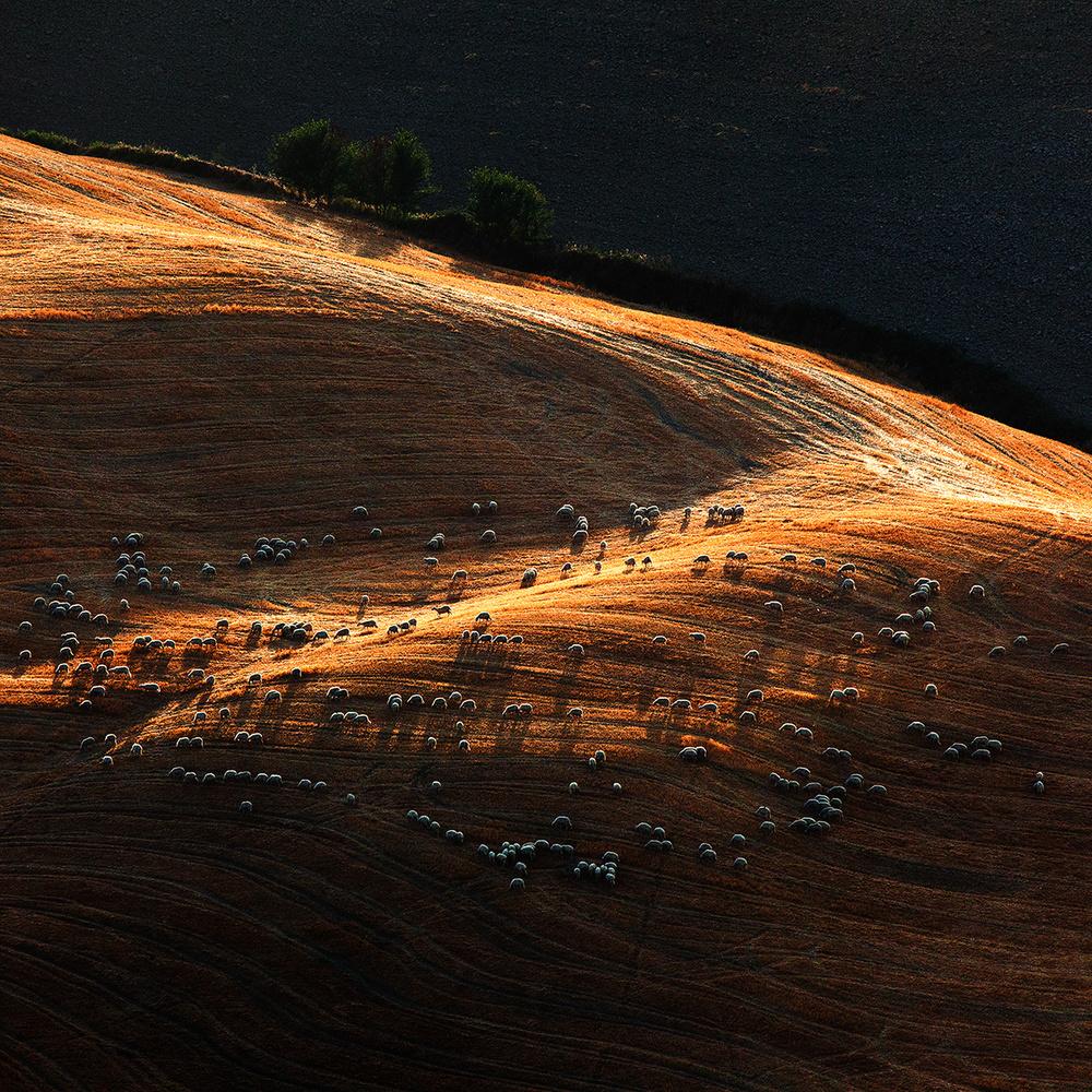 A piece of fine art art photography titled Il Gregge 1 by Massimo Della Latta