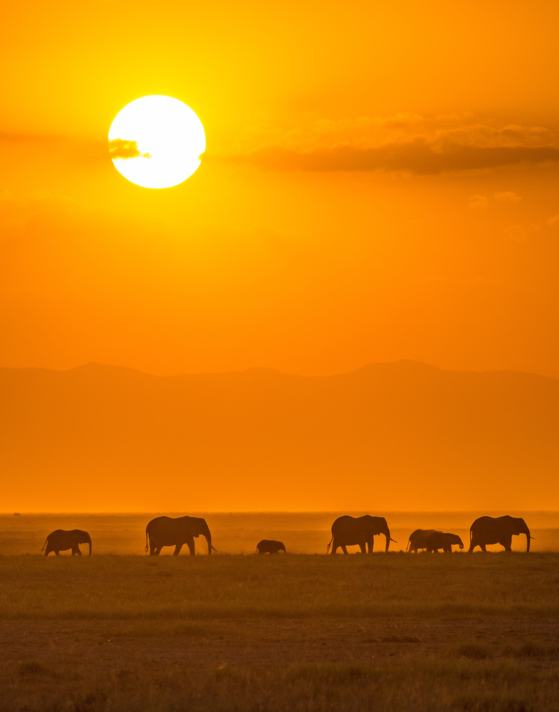 A piece of fine art art photography titled Elephants at Sunset by Ted Taylor