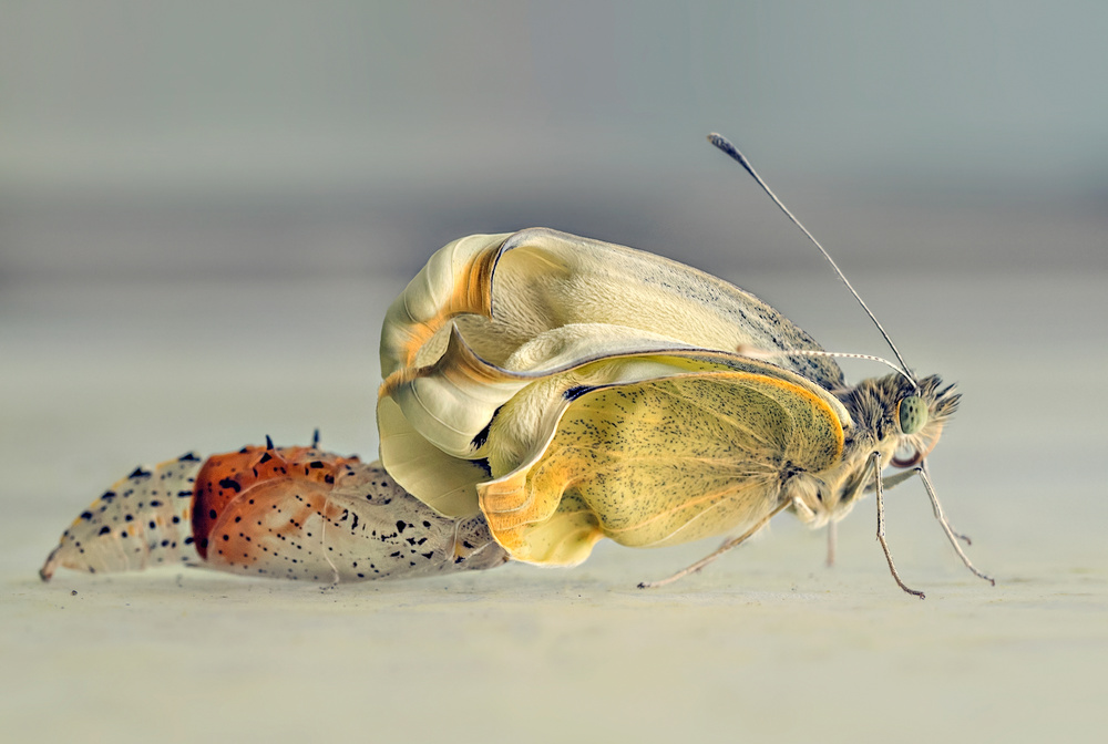 A piece of fine art art photography titled Birth of a Butterfly by Mascha van Lynden