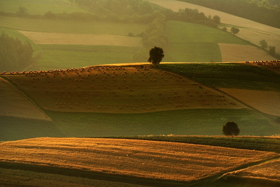 A piece of fine art art photography titled 	 Gold Fields by Janusz Wanczyk