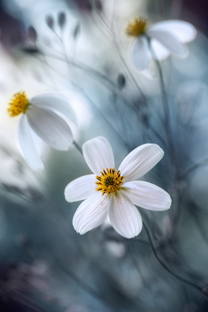 A piece of fine art art photography titled Cosmos by Mandy Disher