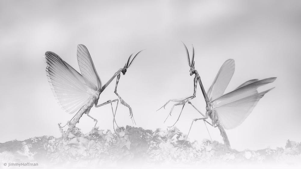 Fairies meeting place