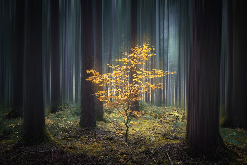 A piece of fine art art photography titled New Life by Carsten Meyerdierks