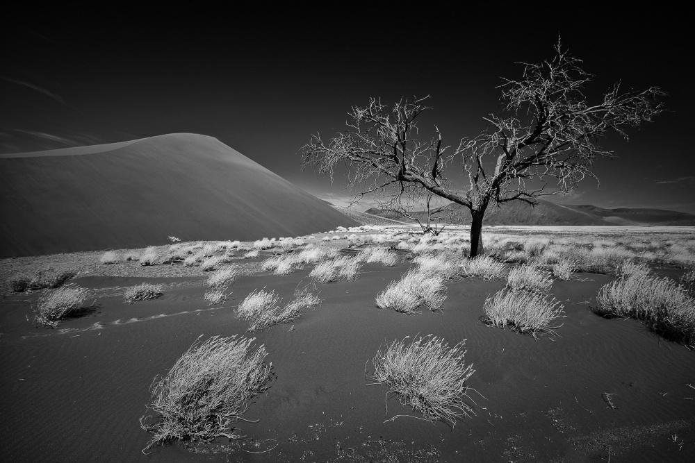 A piece of fine art art photography titled Desert Tree by Stefan Schilbe
