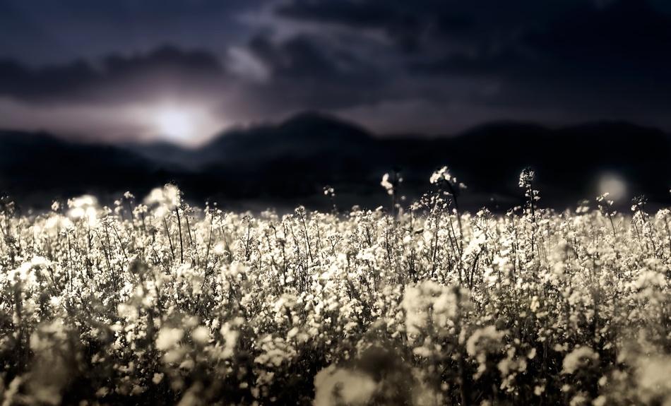 The fields of Galda