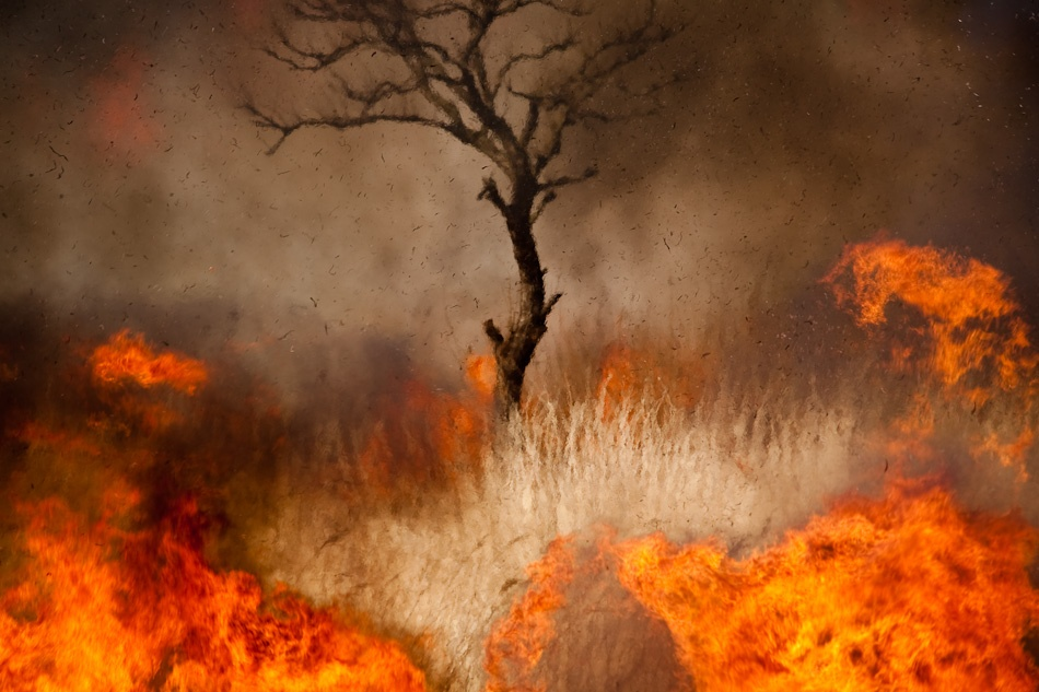 A piece of fine art art photography titled Wildfire by INU