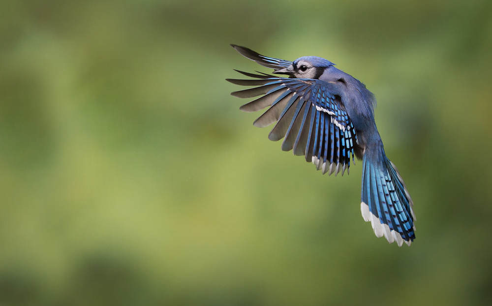 A piece of fine art art photography titled The Art of Flight by Christopher Schlaf