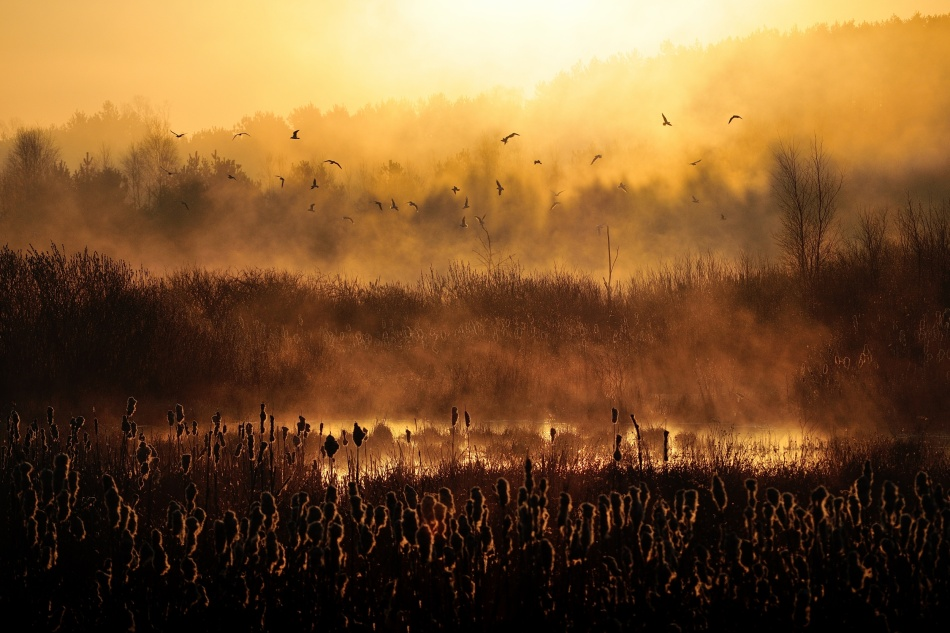 A piece of fine art art photography titled Morning Impression by Przemek Wielicki