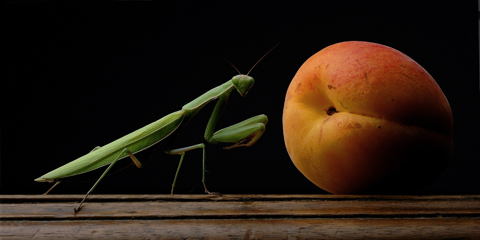 A piece of fine art art photography titled Mantis by bruno barovier