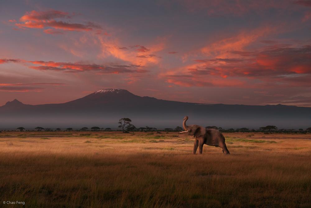 Good Morning, Kilimanjaro