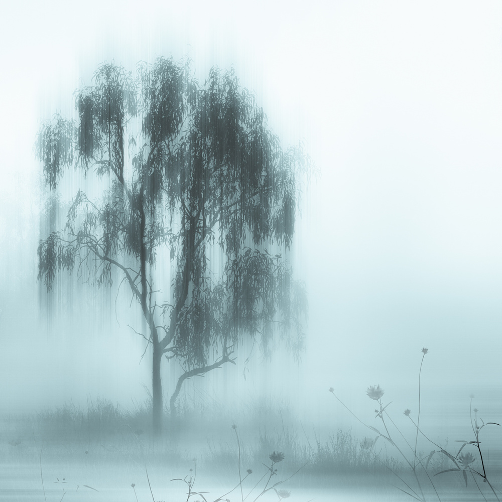 A piece of fine art art photography titled Morningdust by Stefan Eisele