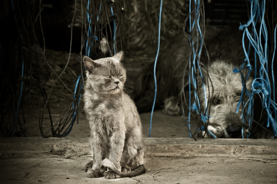 A piece of fine art art photography titled PowerPlay by Drazen Priganica