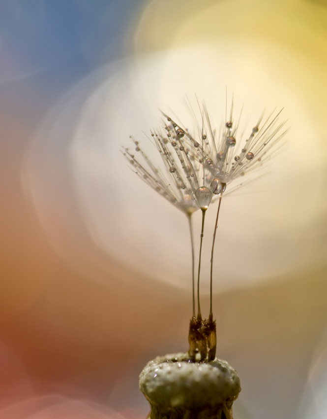 A piece of fine art art photography titled Pearls On Top by Bee Thalin