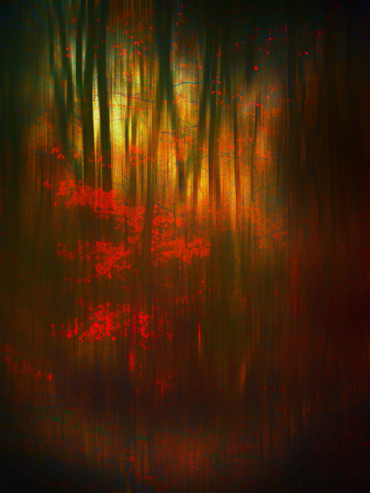 A piece of fine art art photography titled Autumn Morning Aflutter by BethAnne Lutz