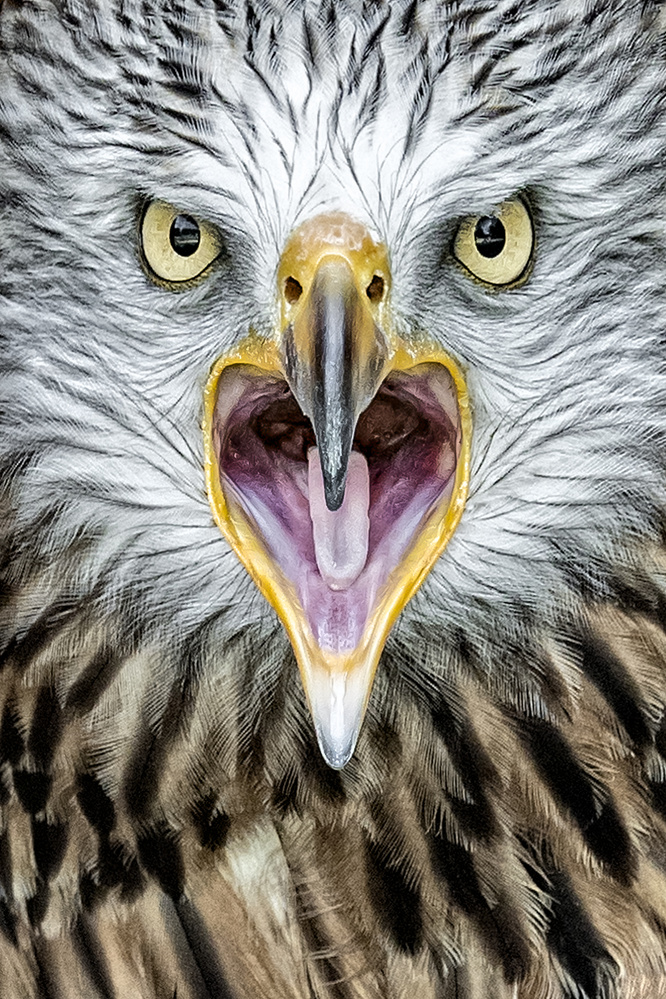 A piece of fine art art photography titled Bird of Prey by Rainer Mueller