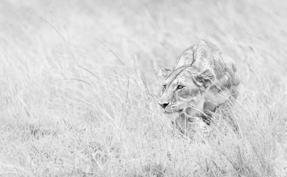 A piece of fine art art photography titled Stealth Mode by Morkel Erasmus