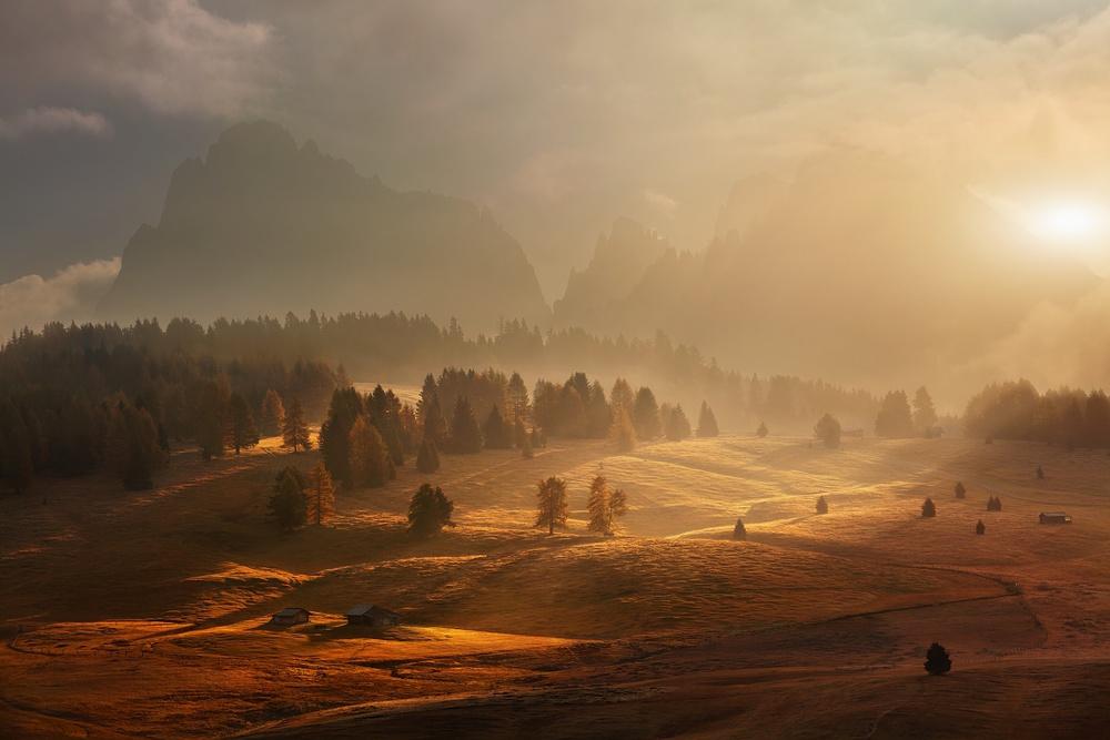 Morning on alpine meadow