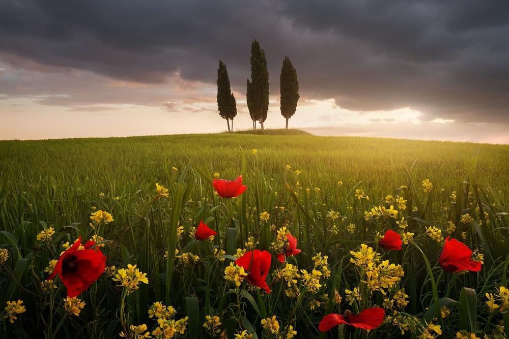 Blooming Tuscany