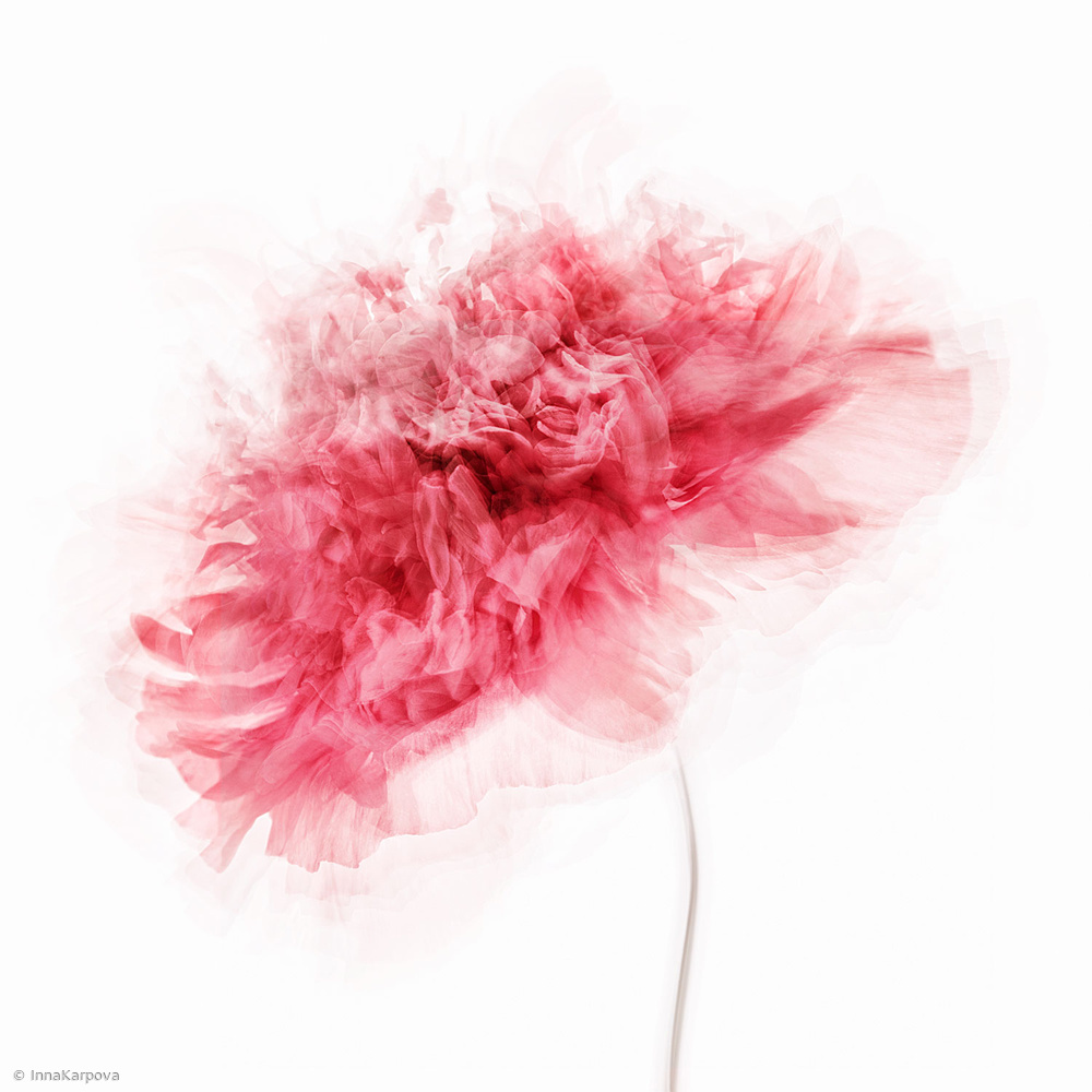 View this piece of fine art photography titled Poppy Impressions by Gaille Gray