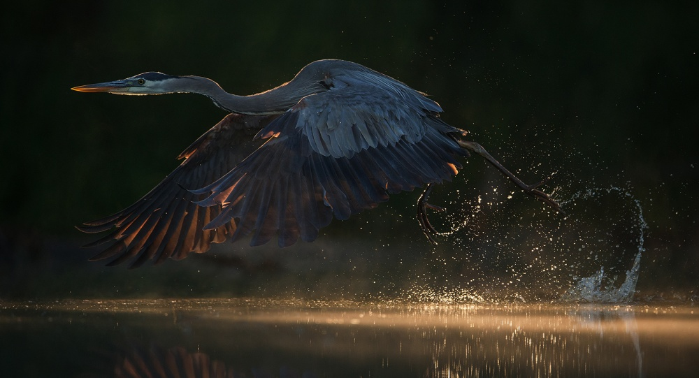 A piece of fine art art photography titled Running Through the Light by Christopher Schlaf