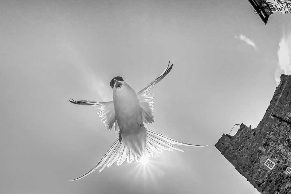 A piece of fine art art photography titled Under Siege-2 by Fabiola Forns