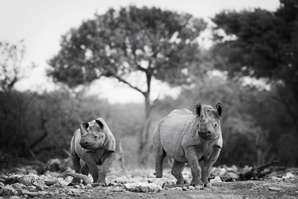 A piece of fine art art photography titled Ghostly Duo by Morkel Erasmus