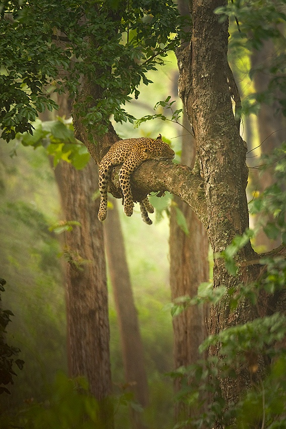 A piece of fine art art photography titled The Sleeping Beauty by Sudhir Shivaram