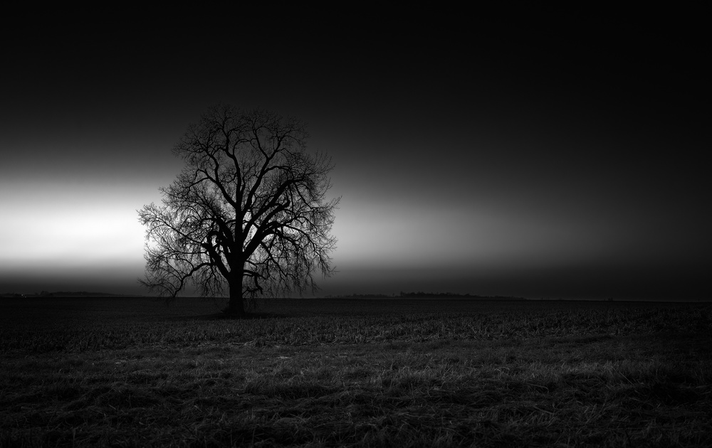 A piece of fine art art photography titled The Single Tree by Dennis Heckman