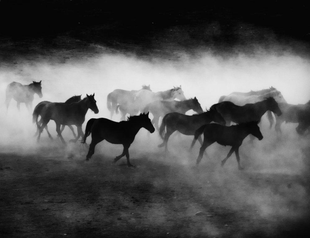 A piece of fine art art photography titled Yilki by Sinem Erdogan