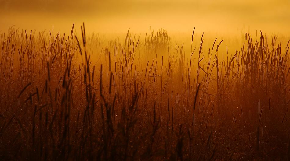 A piece of fine art art photography titled Mist by Joris