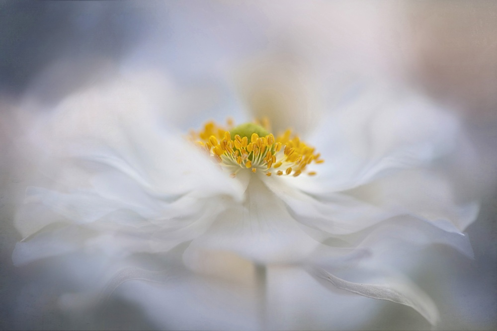 A piece of fine art art photography titled Pirouette by Jacky Parker