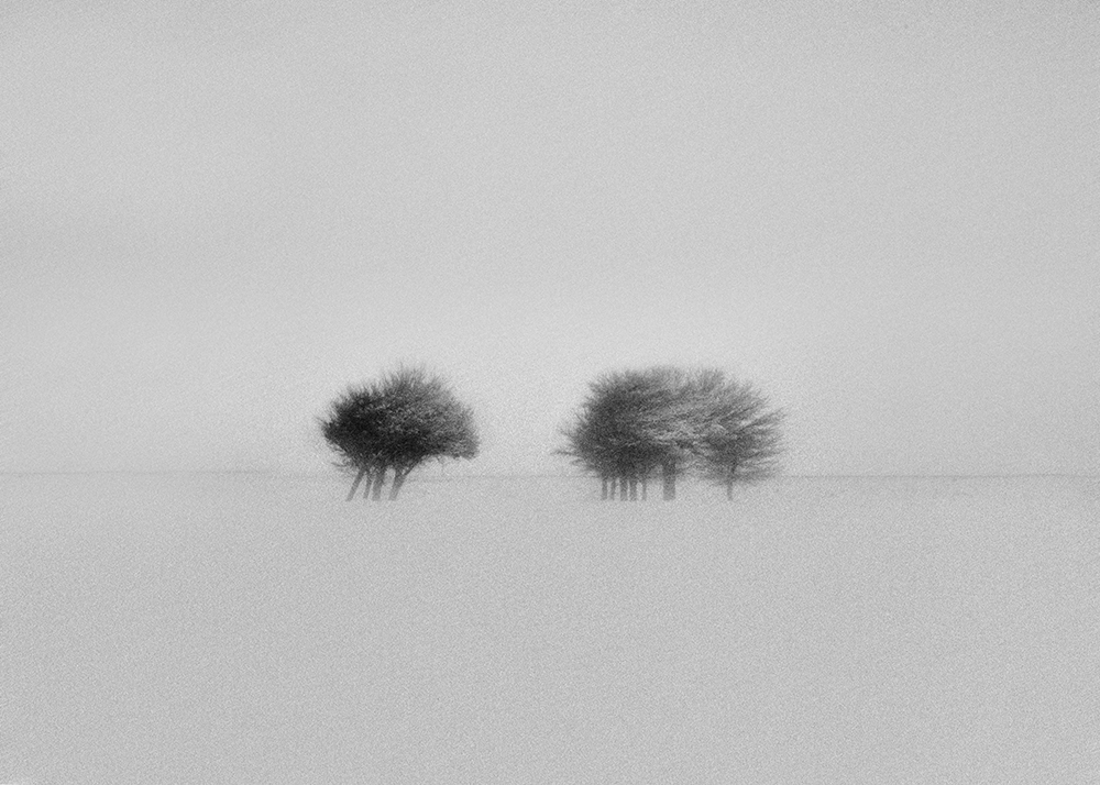 View this piece of fine art photography titled snow by hamid reza helali