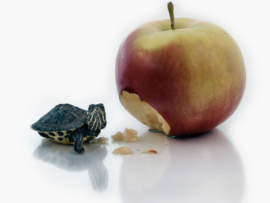 A piece of fine art art photography titled Turtle and Apple by Vedran Vidak