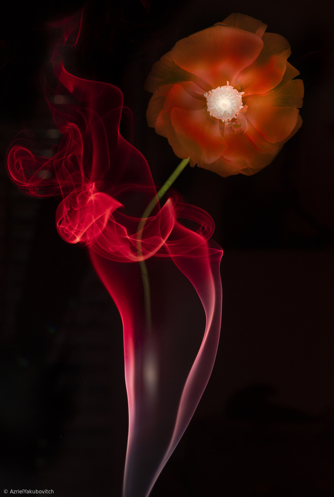 View this piece of fine art photography titled Red Buttercup by Azriel Yakubovitch