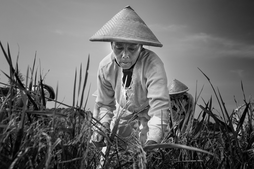 A piece of fine art art photography titled Harvester by Gunarto Song