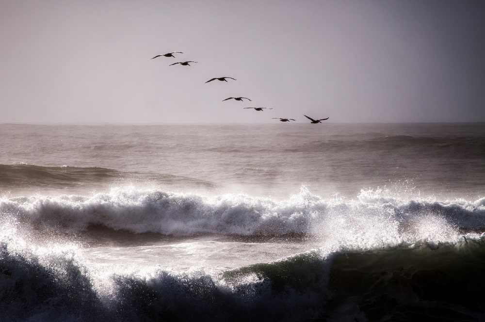 A piece of fine art art photography titled Pelicans by David Rothstein