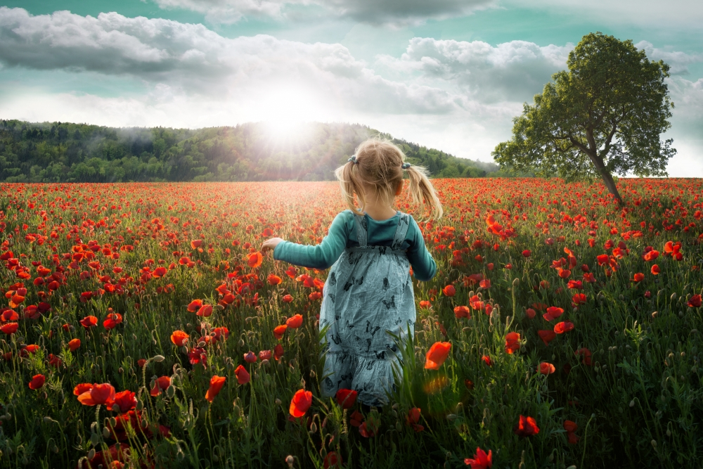 A piece of fine art art photography titled Into the Poppies by John Wilhelm