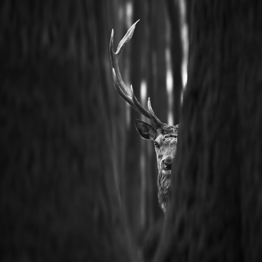 A piece of fine art art photography titled I See You by Tomas Tison