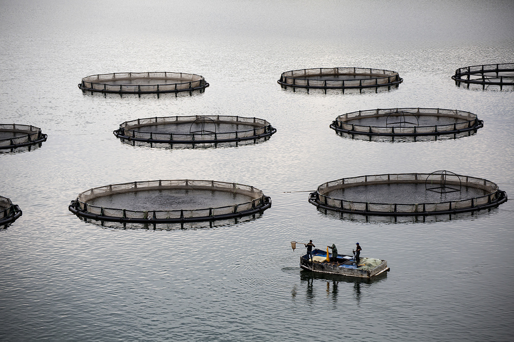 A piece of fine art art photography titled Fish Production by namık toprakçı