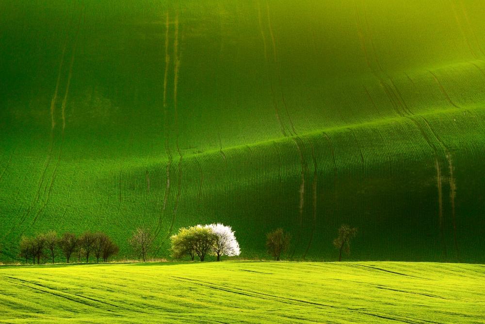 A piece of fine art art photography titled Fields of Green Velvet by Izabela Laszewska-Mitrega/Darek Mitręga