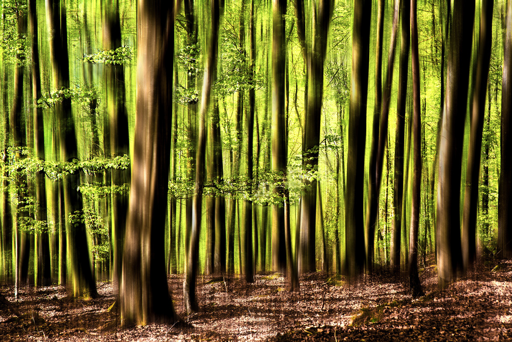 A piece of fine art art photography titled Into the Forest by Bjorn Emanuelson