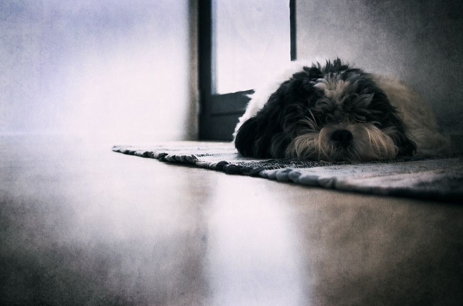 A piece of fine art art photography titled Waiting for Mom by Jesper Larsen